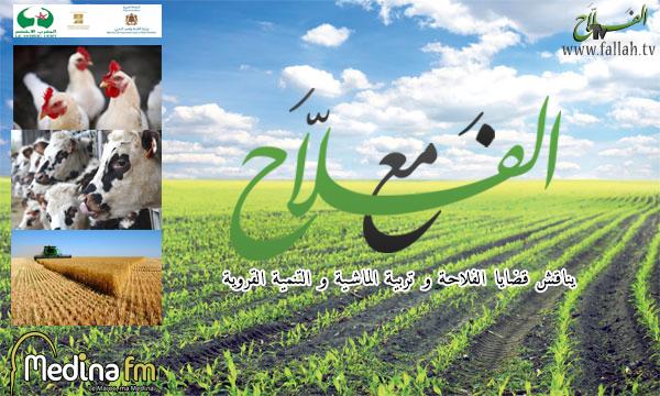 affiche maa alfalah site