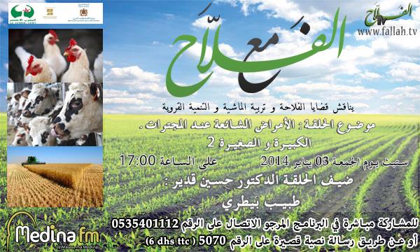 affiche maa alfalah 2