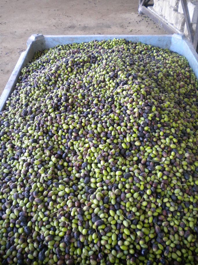 stock olive