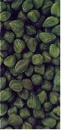 Capucines 8.5∅ 8 - 8.5 mm