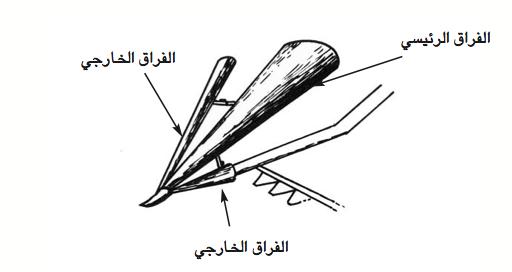 الرسم 6: الفرّاق