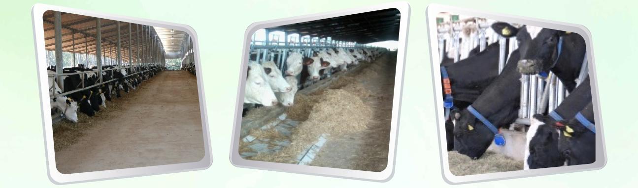 الحليب الأبقار